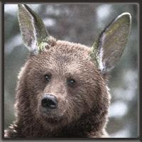 bear troop forever